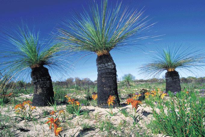 Crass Trees Coral Coast