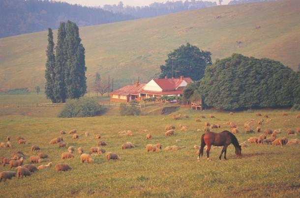 Homestead - Urlaub und arbeiten auf dem Bauernhof