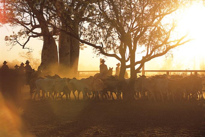 Grazier auf einer Rinderfarm im Outback
