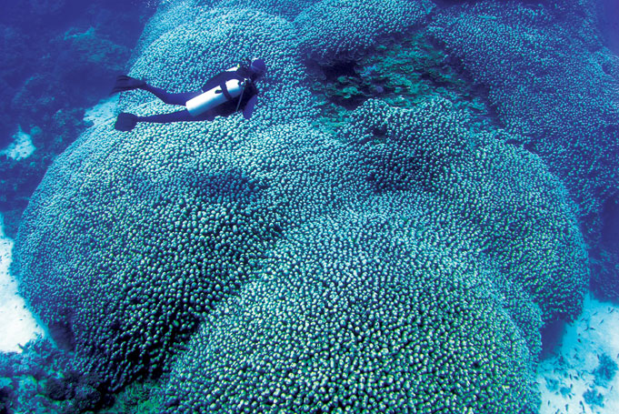 Mit der Poseidon am Great Barrier Reef tauchen