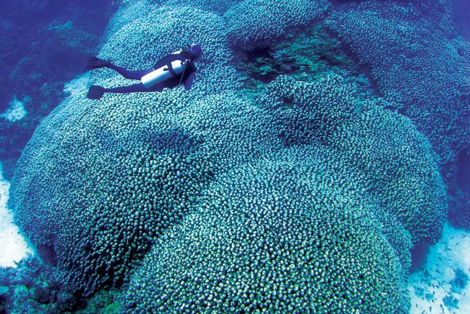 Mit der Poseidon am Great Barrier Reef tauchen