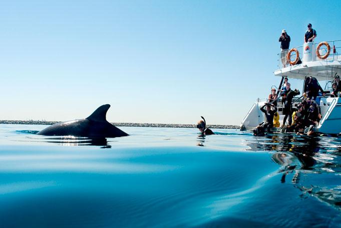 Swim With Dolphin in Rockingham