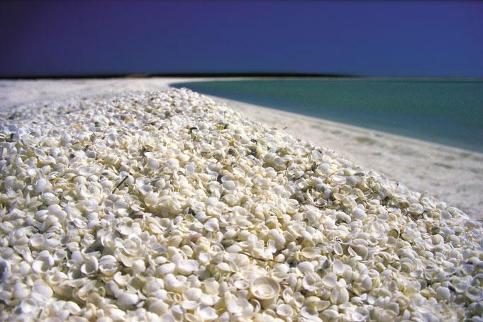 Shell Beach in der Shark Bay