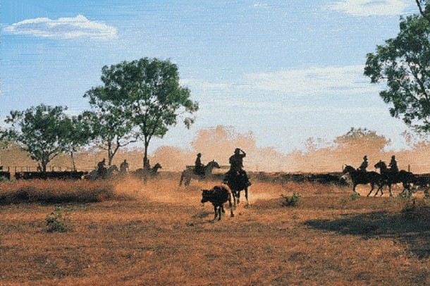 Cattle im Outback