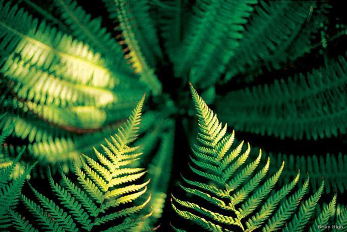 In Neuseeland sind 80% der Pflanzen endemisch