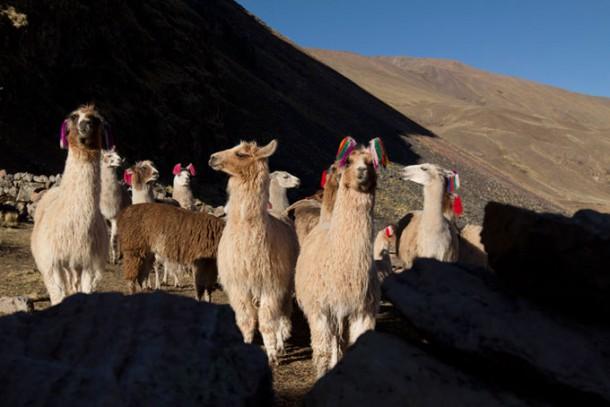 Peru reisen individuell von Abenteuer & Erlebnisreisen